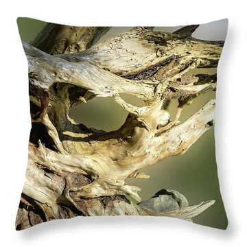 Throw Pillow featuring the photograph Wood Log In Nature No.14 by Juan Contreras