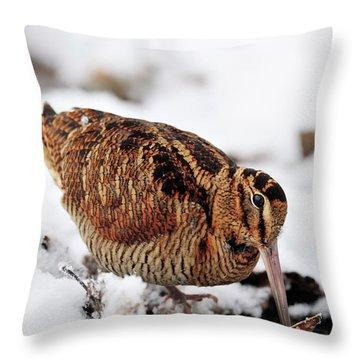 Woodcock Probing For Prey In Marsh, Berwickshire, Scotland Throw Pillow