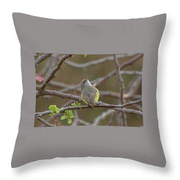 Yellow-bellied Eremomela Throw Pillow