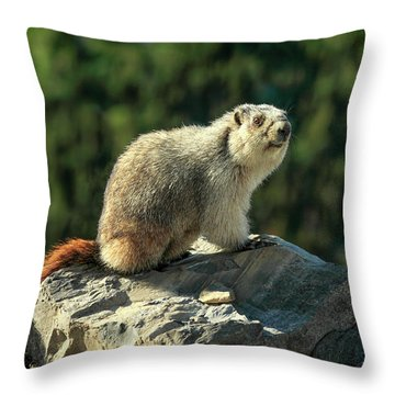 Yellow-bellied Marmot Throw Pillow