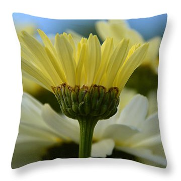 Throw Pillow featuring the photograph Yellow Daisy by SimplyCMB