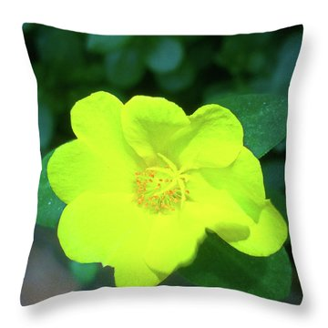 Yellow Hypericum - St Johns Wort Throw Pillow