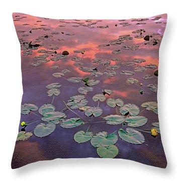 Yellow Pond Lilies At Sunset, North Throw Pillow