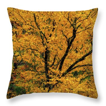 Yellow Tree Leaf Brilliance  Throw Pillow