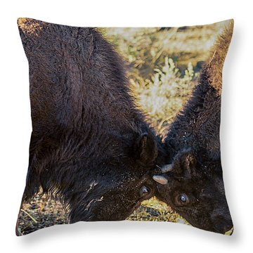 Throw Pillow featuring the photograph Young Bison by Pete Federico