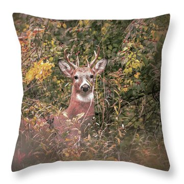 Throw Pillow featuring the photograph Young Buck Portrait by Dan Sproul