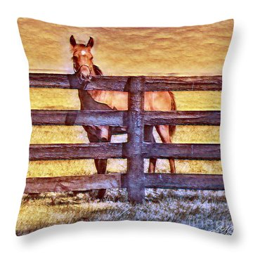 Young Kentucky Thoroughbred Throw Pillow
