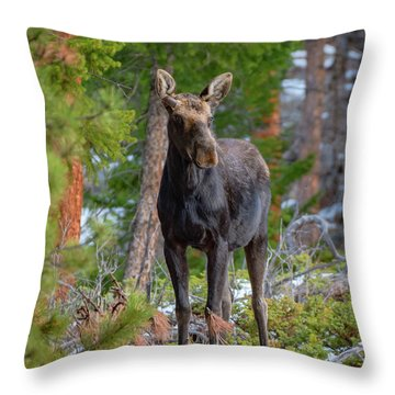 Young Moose In The Morning Forest Throw Pillow