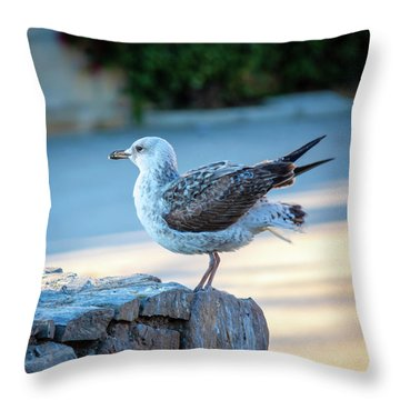 Young Seagull II Throw Pillow