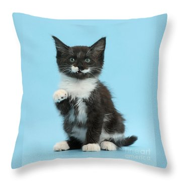 Throw Pillow featuring the photograph You're The Rat Who Ate My Cornflakes by Warren Photographic