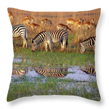 Zebras In Botswana Throw Pillow