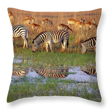 Zebras In Botswana Throw Pillow