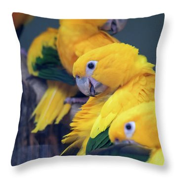 Sun Conure Throw Pillows Fine Art America