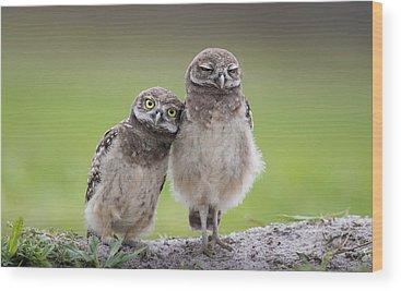 Burrow Owl Wood Prints