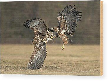 Bird Strike Wood Prints