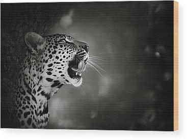 Leopard Photographs Wood Prints