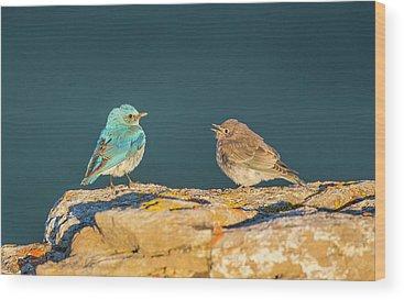 Turdidae Wood Prints