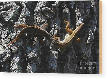 Brown Anole Wood Prints