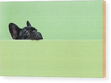 One Animal Wood Prints