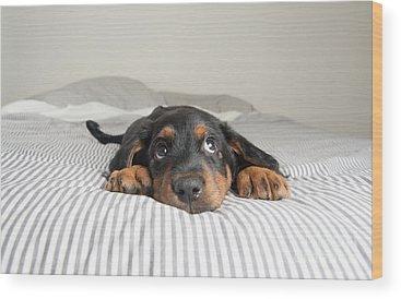Pups Wood Prints