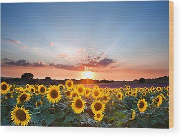 Sunflower Seeds Photographs Wood Prints