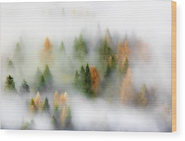 Misty Wood Prints
