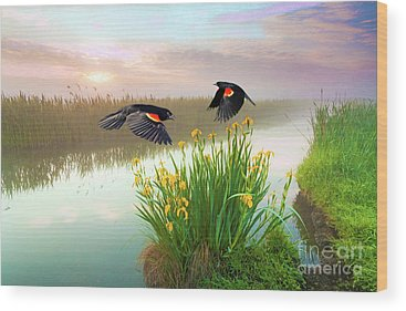 Red-winged Blackbird Wood Prints