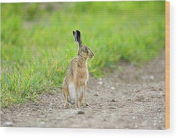 European Hare Wood Prints
