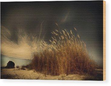 Reeds Wood Prints