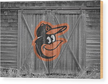 Baltimore Oriole Wood Prints