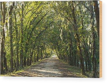 Brazos Bend State Park Wood Prints