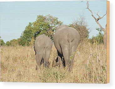 Chobe National Park Wood Prints