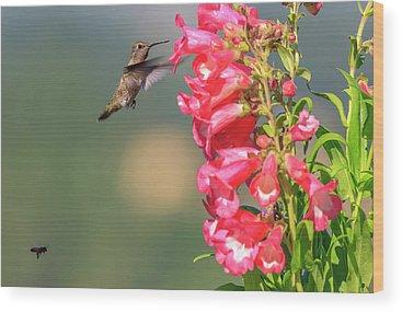 Annas Hummingbird Wood Prints