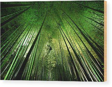 Foliage Wood Prints