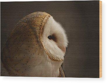 Barn Owl Wood Prints