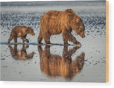 Brown Bear Wood Prints