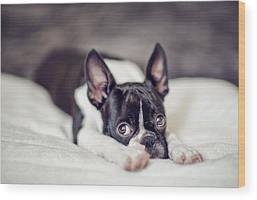 Boston Terrier Wood Prints