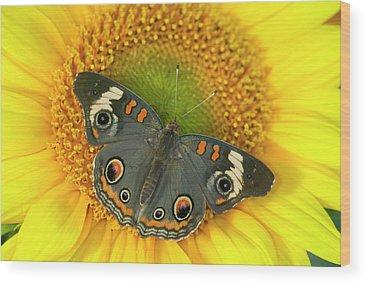 Buckeye Butterfly Wood Prints