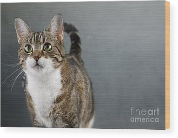 Domestic Cat Wood Prints