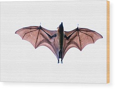 Bat Wood Prints