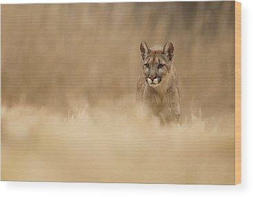 Puma Wood Prints