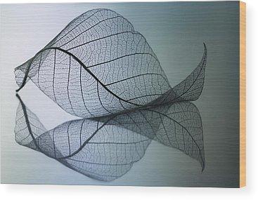 Curved Wood Prints