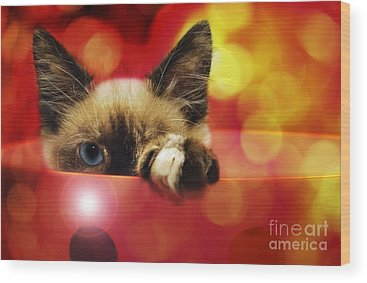Andee Design Kitties Wood Prints