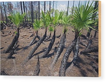 Lake Okeechobee Wood Prints