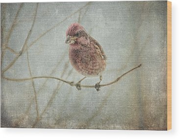 House Finch Wood Prints