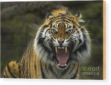 Tiger Wood Prints