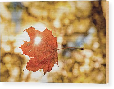 Designs Similar to Falling Leaf