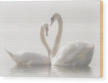 Swan Wood Prints