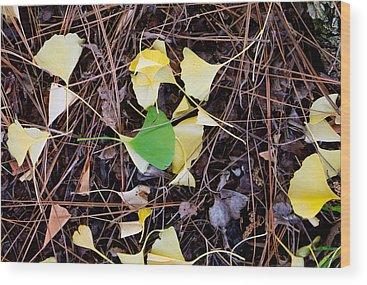 Gingko Wood Prints