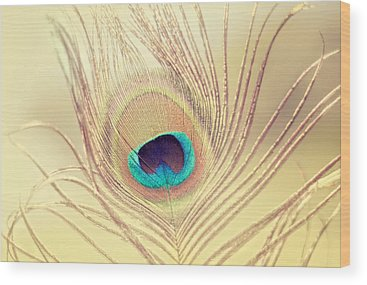 Feathers Photographs Wood Prints